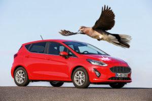 إزالة فضلات الطيور من السيارة