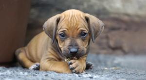 20000 يورو كلفة دهس مخلب كلب صغير